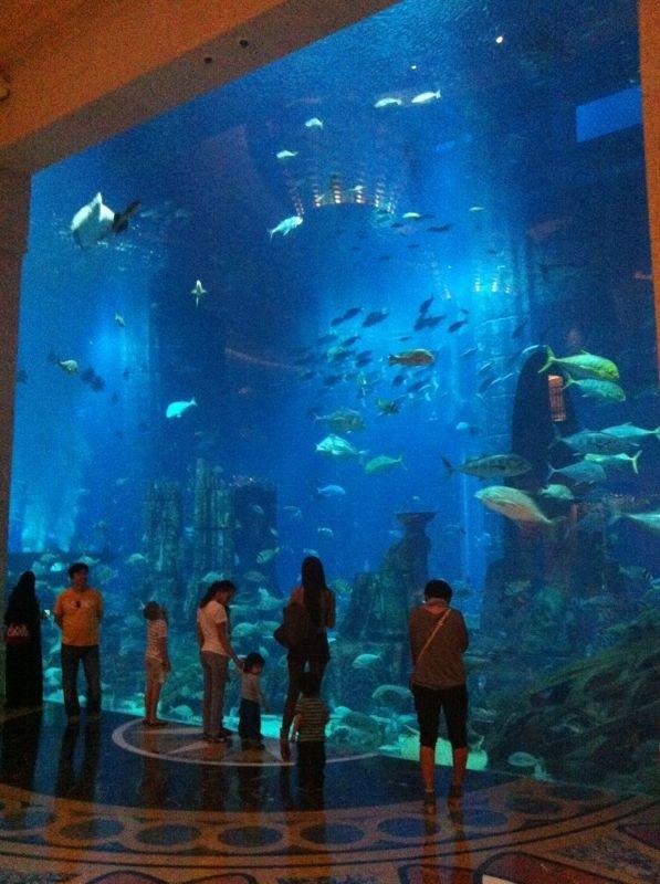 Atlantis Palm Aquarium